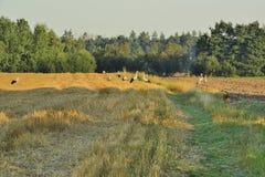 Дорога вдоль поля Стоковое фото RF