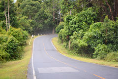 Дорога в пуще Стоковое Фото