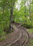 Дорога в пуще Стоковые Фото