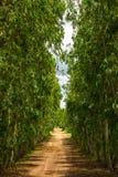 Дорога гравия в Азии Стоковое Фото