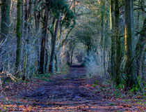 Дорога леса в вечере Стоковые Изображения
