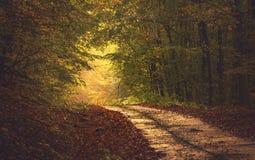 Дорога леса осени Стоковое Фото