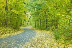 Дорога леса осени Стоковые Изображения