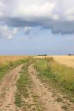 Дорога на поле Стоковые Фотографии RF