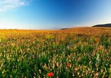 Дорога на поле Стоковая Фотография
