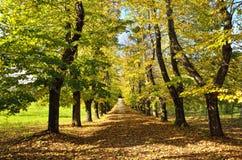 Дорога с деревьями Стоковые Фотографии RF