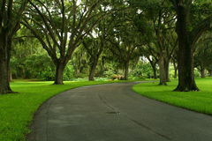 дорога тропическая Стоковые Фото