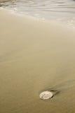 Доллар песка Стоковое фото RF