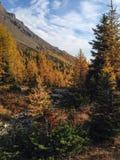 Долина лиственницы Стоковые Изображения