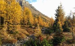 Долина лиственницы Стоковые Фото