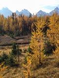 Долина лиственницы Стоковые Изображения RF