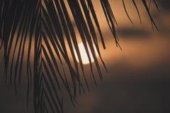 Драматический тропический заход солнца Стоковые Изображения
