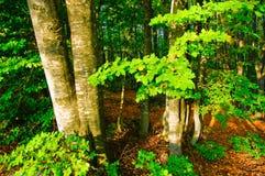 Древесина лета Стоковая Фотография
