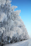 древесина зимы дороги березы Стоковая Фотография RF