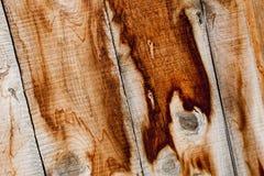 Древесина кедра всходит на борт предпосылки Стоковое Изображение