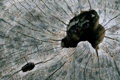 древесина отверстия Стоковая Фотография RF