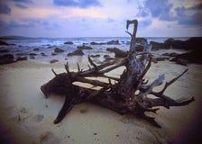 древесина смещения пляжа Стоковое Изображение