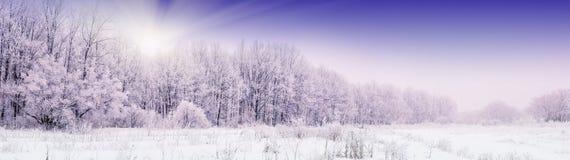 Древесина снега Стоковые Фото
