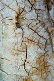 Древесина трескает текстуру Стоковые Изображения
