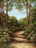 древесина footpath Стоковое Изображение