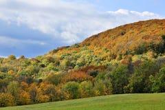 Древесины вены в осени Стоковое Изображение
