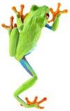 Древесная лягушка наблюданная красным цветом Стоковая Фотография