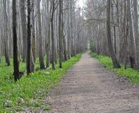 Другой hiking путь Стоковые Фото
