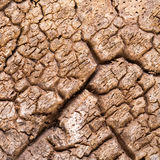 Дуб пробочки расшивы сухой Стоковые Фотографии RF