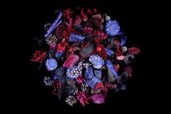 душистые травы плодоовощей Стоковое Изображение