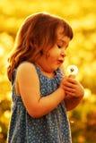дуя заход солнца одуванчика ребенка Стоковое фото RF