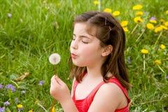 дуя семена девушки одуванчика маленькие Стоковые Фотографии RF