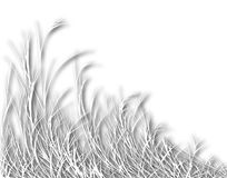 дуя трава Стоковое Изображение