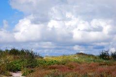 Дюны и трава Стоковые Изображения