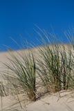 дюны пляжа засевают песок травой Стоковые Фотографии RF