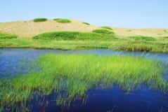 дюны greenwich Стоковые Фотографии RF