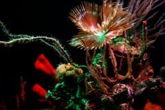水下五颜六色的寿命 库存图片