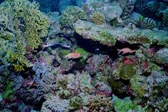 水下珊瑚生活的礁石 库存图片