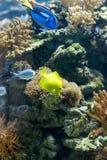水下的世界 图库摄影