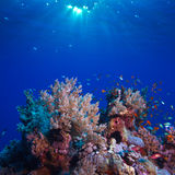 水下的充分风景美丽的珊瑚礁五颜六色的鱼 免版税库存图片