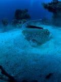 水下的光芒 免版税库存图片
