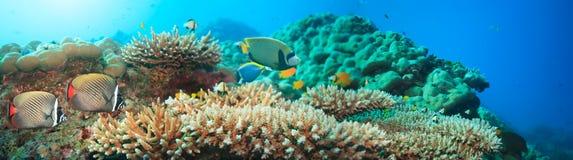 水下的全景 免版税图库摄影