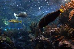 水下的摘要 免版税库存图片