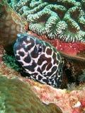 水下的生物 免版税库存照片