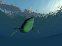 水下的鲸鱼 免版税库存图片