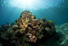 水下的sceane 库存图片