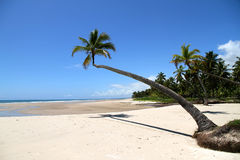 巴伊亚海滩 库存图片