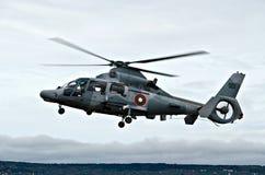 直升机豹 库存照片