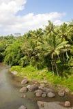 巴厘岛河 图库摄影