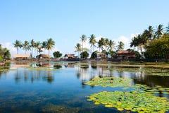 巴厘岛盐水湖莲花 库存照片