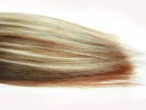 头发多彩多姿的红色通知白色 库存照片